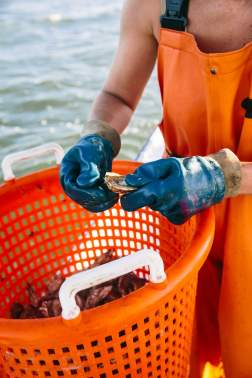 20130904_progressive_oysters_15-1.jpg
