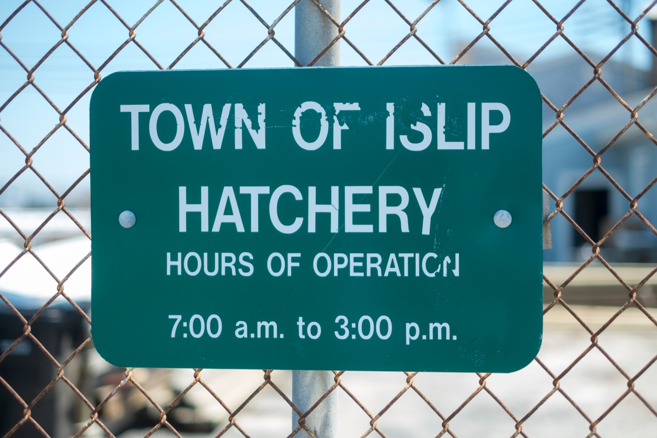 Great South Bay Hatchery