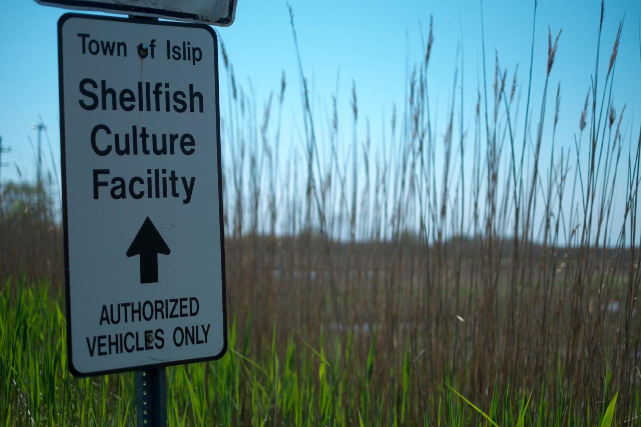 Islip Shellfish Hatchery